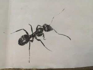 Ameisenkopiebild